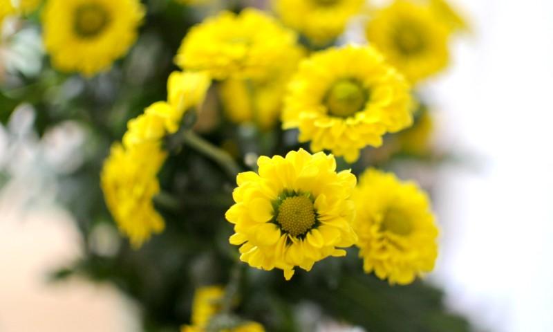 2_Blumen_b